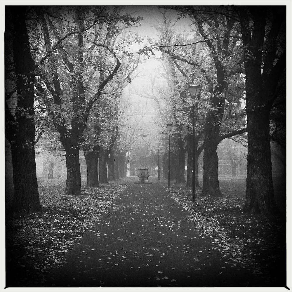 Fog. by tbartoshyk