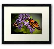 Butterflies & Purple Flower Framed Print