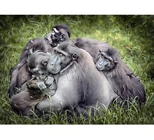 Monkeys - Sulawesi Crested Macaque Photographic Print