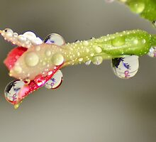 Drops of Breast Cancer Awareness. by Eileen Aquiningoc  Schwake