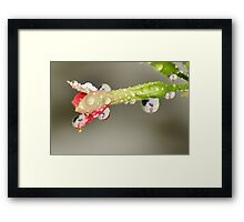 Drops of Breast Cancer Awareness. Framed Print
