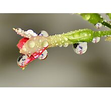 Drops of Breast Cancer Awareness. Photographic Print