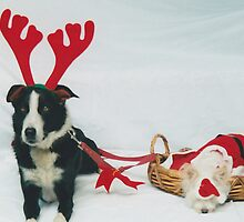 Merry Christmas from Santa Paws by Fiona Allan Photography
