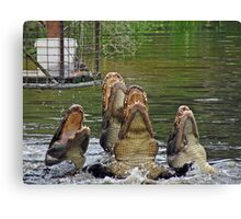 Singing for their supper... Canvas Print