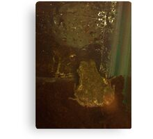 Two Frogs Meet Canvas Print