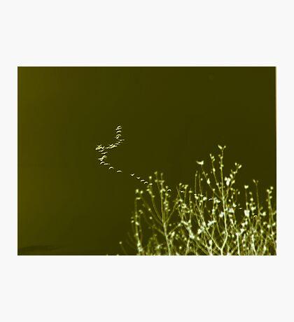 Flock Photographic Print