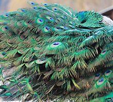 Fabulous Feathers by KansasA