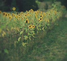 Sunflower Garden by maxygreat
