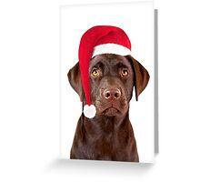 Christmas Labrador dog Greeting Card