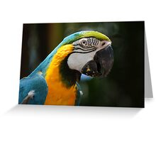 Blue coloured macaw Greeting Card