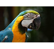 Blue coloured macaw Photographic Print