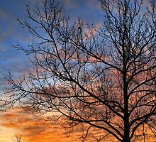 Sunrise Over Sycamore by Carolyn  Fletcher