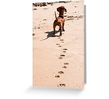 A Dog's Day on the Beach Greeting Card