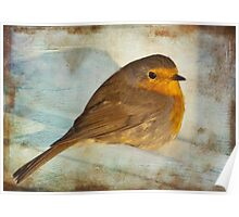 rescued robin Poster