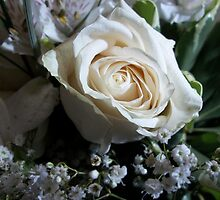 Single White Rose by ArtBee