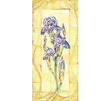 Retro Iris  Photographic Print