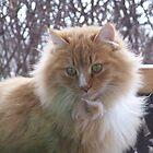 Orange Cat by Crystal Zacharias