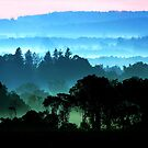 Stillwell Morning Mist by gzupruk