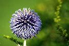 Blue Flower Landscape by John Dalkin