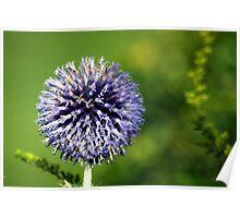 Blue Flower Landscape Poster