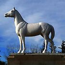WHITE HORSE PLAINS  by Larry Trupp
