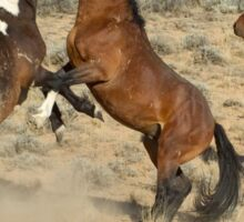 Fighting Wild Horses-Signed-2723 Sticker