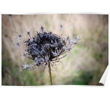 Winters Flowers Poster