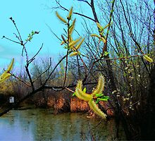The Catkins by Larry Trupp