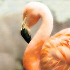 Flamingo Dreaming by Kathryn Potempski