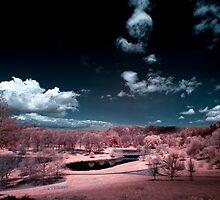 Cornell Plantations IR by gzupruk