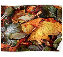 Late autumn in Betty's garden Poster