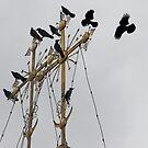 Black Ravens above the World by cishvilli