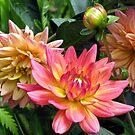 Fragrant Grouping by Deborah Crew-Johnson