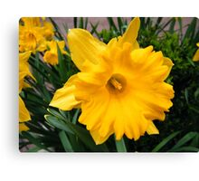 Colorful Spring Flowers, New York City Canvas Print