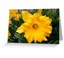 Colorful Spring Flowers, New York City Greeting Card