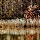 Winter Lake Shimmer by Deborah Crew-Johnson
