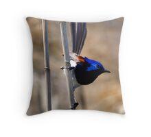 Varigated Fairy Wren Throw Pillow