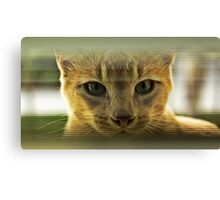 Community Cat Canvas Print