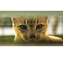 Community Cat Photographic Print