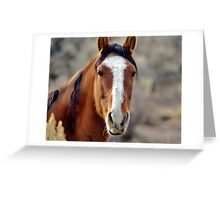 Wild Horses in Palomino Valley Nevada Greeting Card