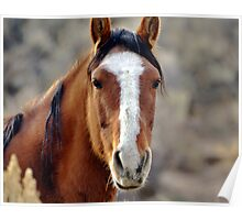 Wild Horses in Palomino Valley Nevada Poster
