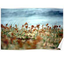 beach textures Poster