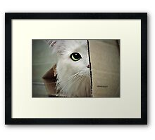 Mikey Sees You  Framed Print