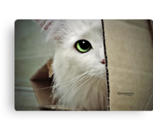 Mikey Sees You  Canvas Print