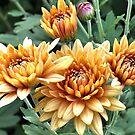 4 1/2 blooms by Lenny La Rue, IPA