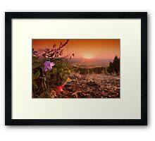 Bluebell Sunset Framed Print