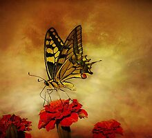 Open Your Wings And Fly by EvaMarIza