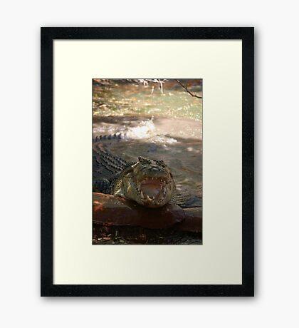 saltwater croc Framed Print