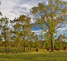 Meandering Cattle by GayeL Art
