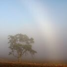 ~ The Tree and the Fog Bow ~ by LeeoPhotography